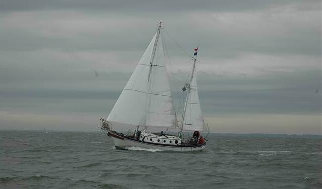 Seadog under sail